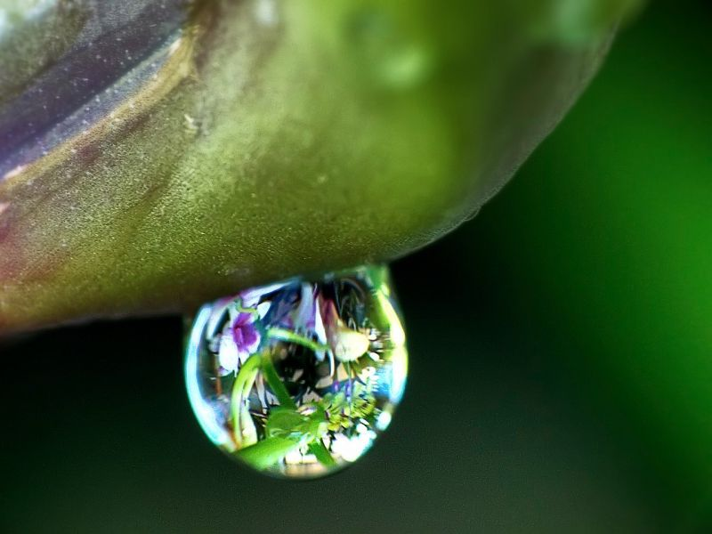 raindrop on orchid