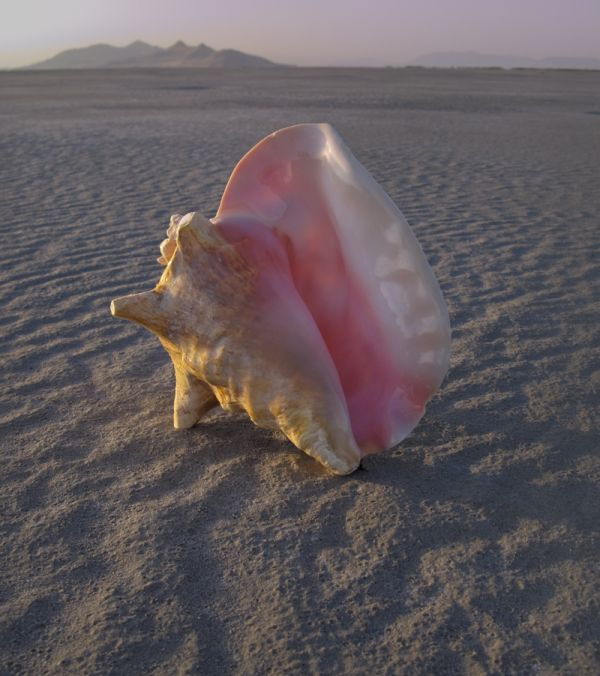 Conch Shell on the sand at the Great Salt Lake