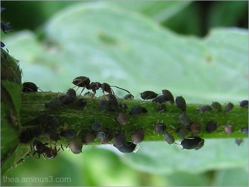 ants macro garden insects