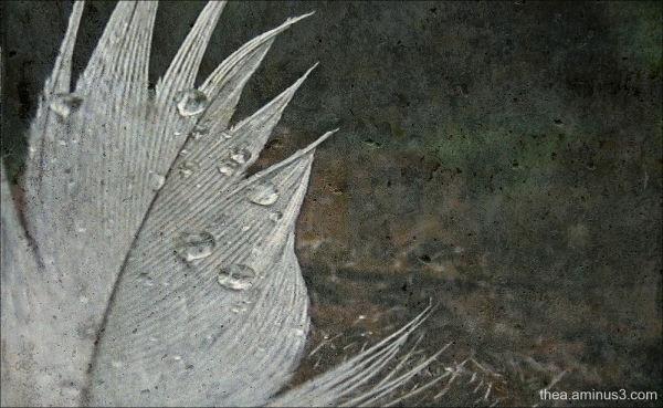 macro feather rain