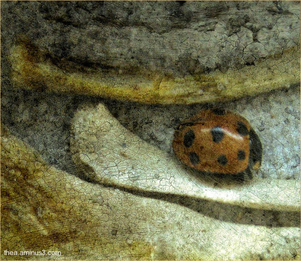 macro bones ladybird