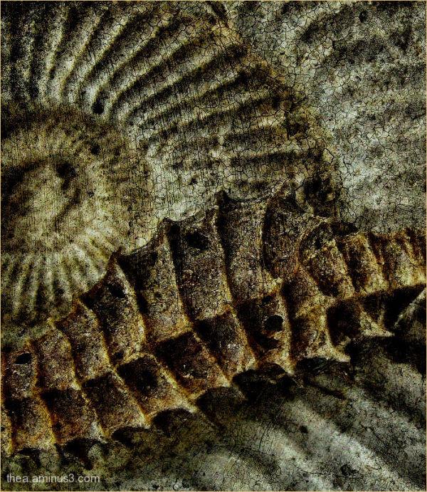 ammonite fossile seahorse macro
