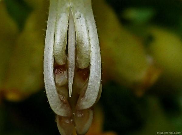 seed rain garden macro