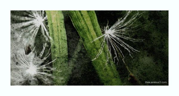 seed plant macro