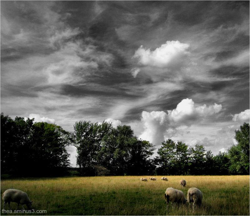 sheep clouds Friesland
