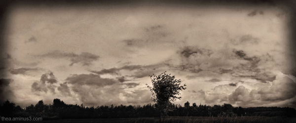 landscape Friesland clouds wind willow
