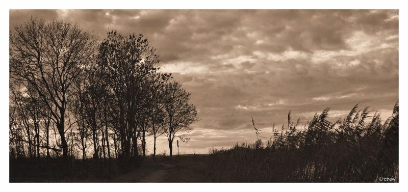 landscape sepia silhouettes