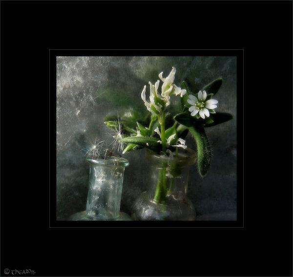 weeds flowers bottles macro