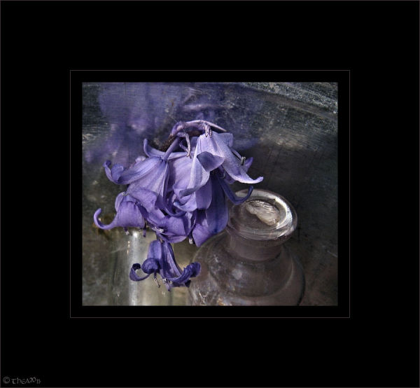 flower glass macro