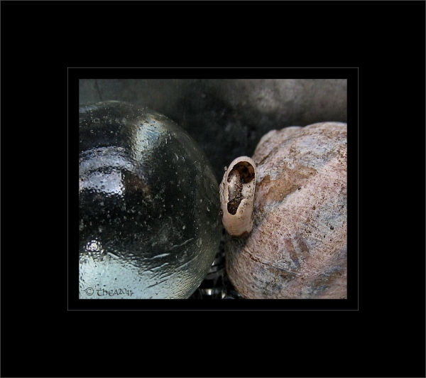 marble snail cottage macro