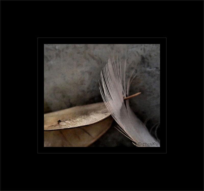 feather leaf macro