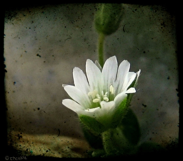 macro processed white flower
