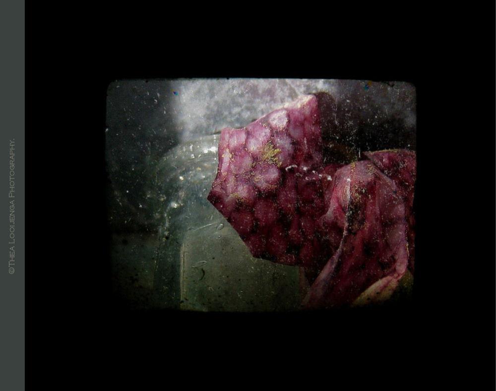 flower kievietsbloem fritillaria macro processed