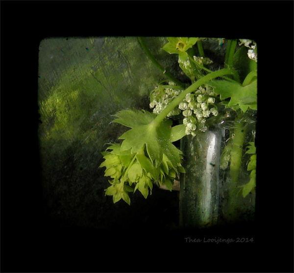 macro weeds bottle