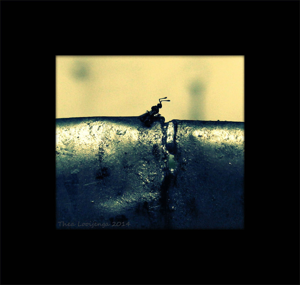 macro flying ant processed