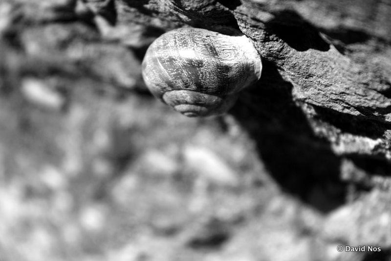 Snail Jamboree