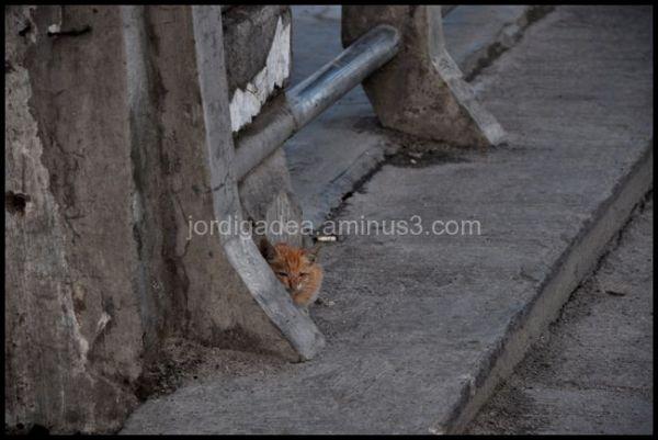 cat, poor, little cat