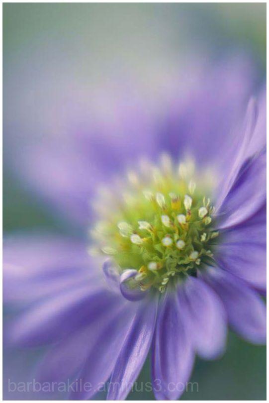 Lensbaby flower macro