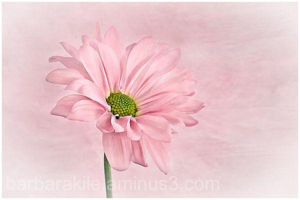 Gentle texture of flower