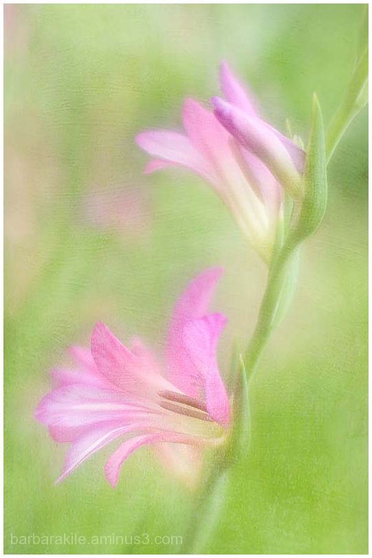 Lensbaby image with soft texture overlay