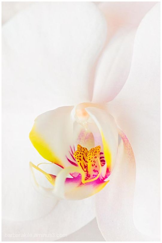 Orchid with texture overlay