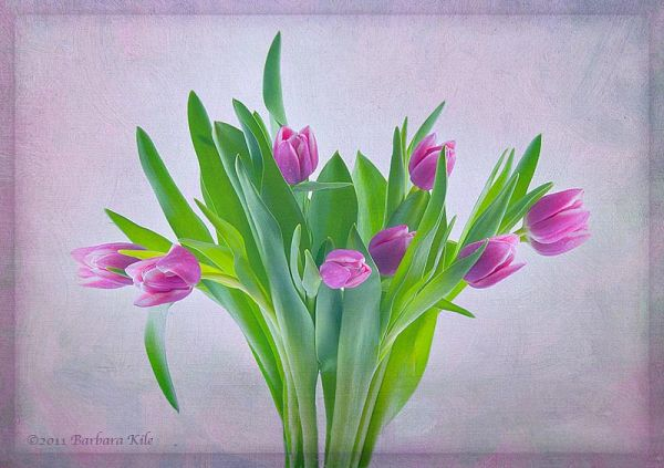 Tulips and texture