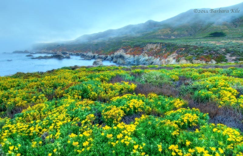 Yellow wildflowers and fog in Big Sur