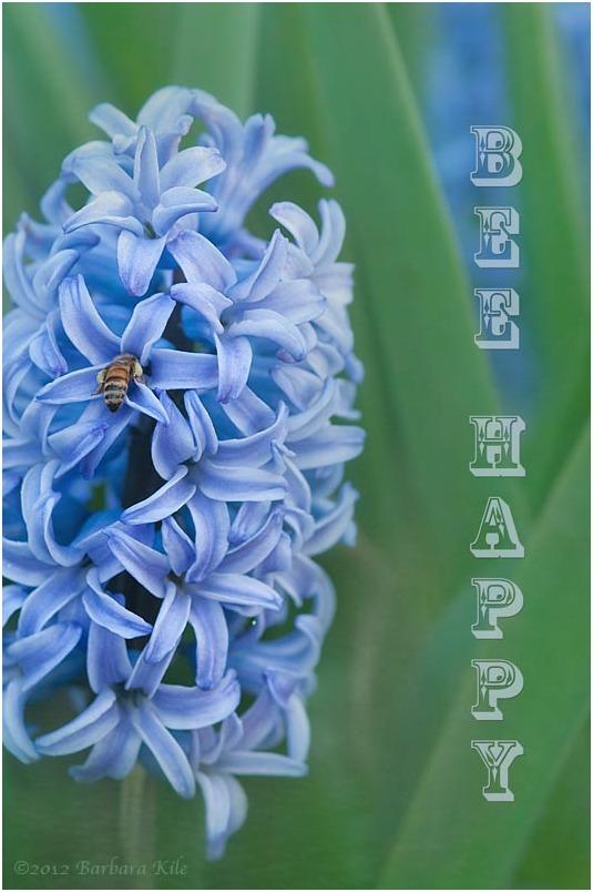 hyacinth and bee