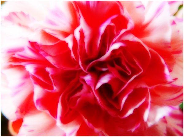 Flower Power - 2