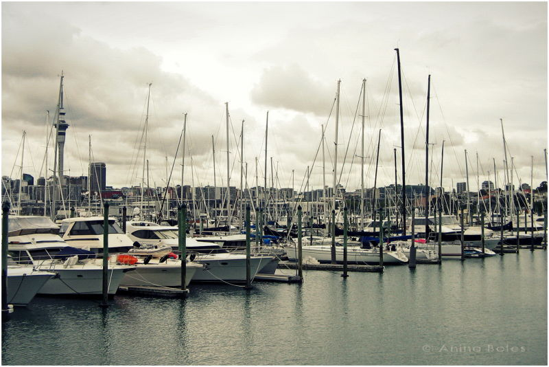 Westhaven Marina, Auckland, Yachts