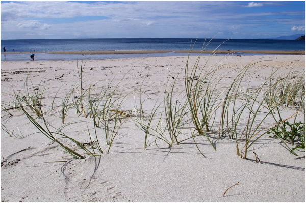 Beach, Grass, Sand, Waiheke Island