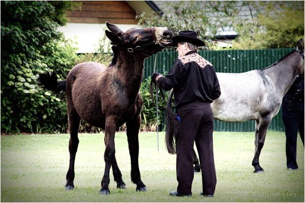 Mule, Hat, Man, Show