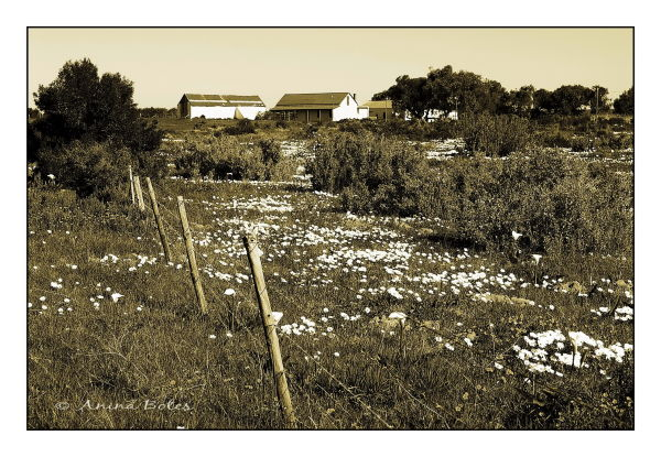 Farm, Spring, Sepia