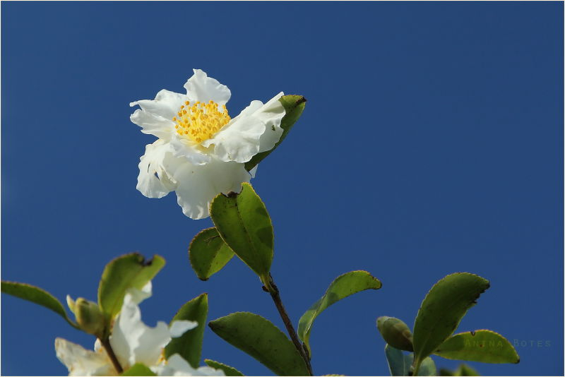 Blue, Sky, White, Flower, Autumn
