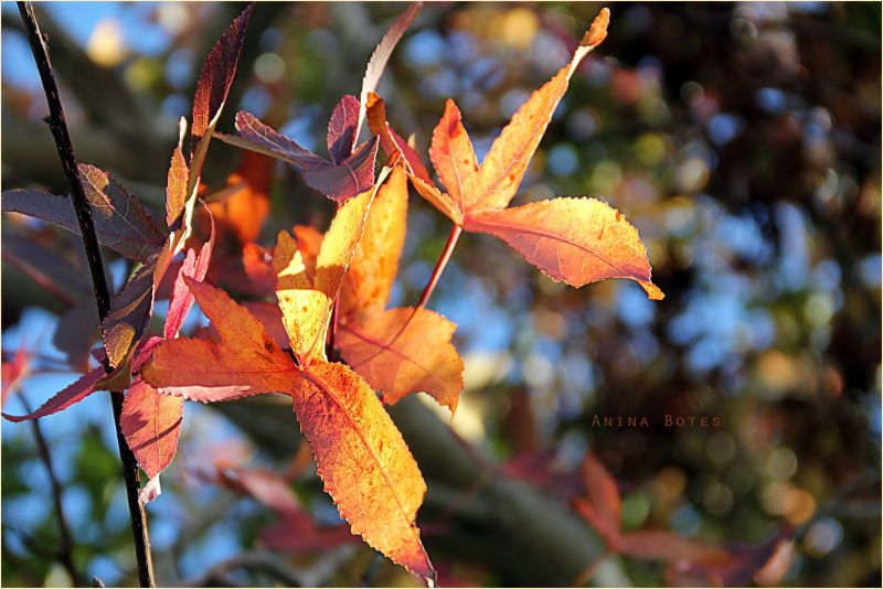 Autumn, Colors, Leaves, Bokeh, Light