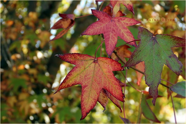 Autumn, Leaves, Bokeh, NZ