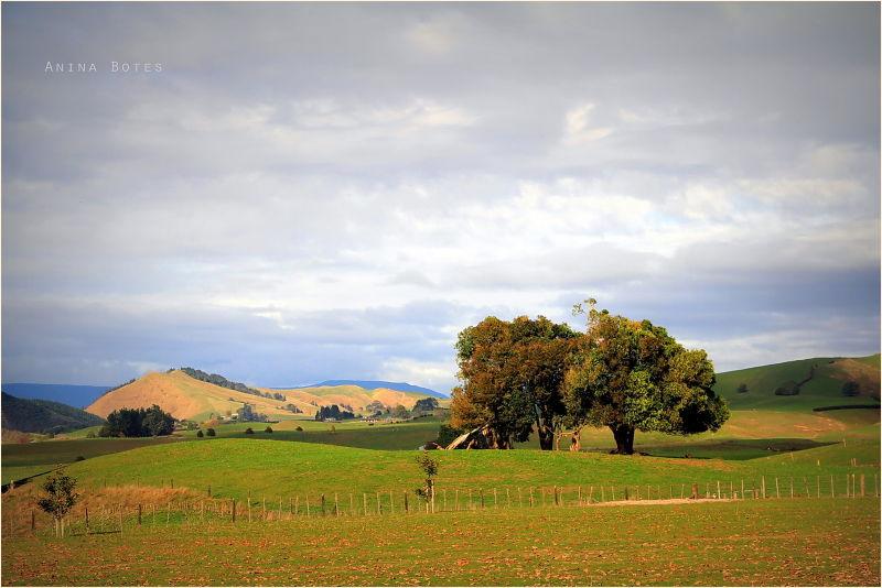 Landscape, Autumn, NZ