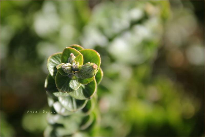 Green, Plant, Macro, Bokeh, NZ