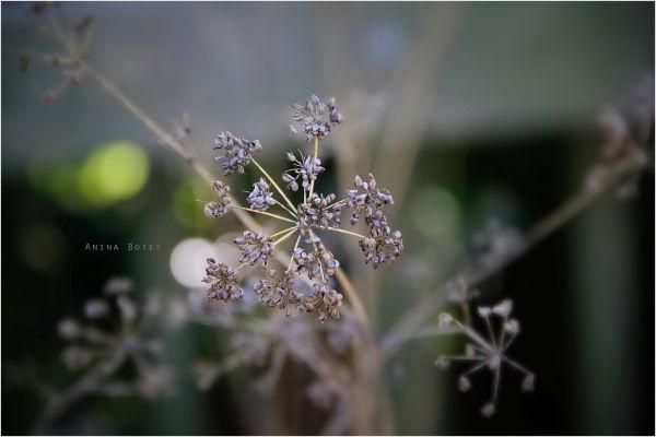 Winter, Plants, Seeds, Garden, NZ
