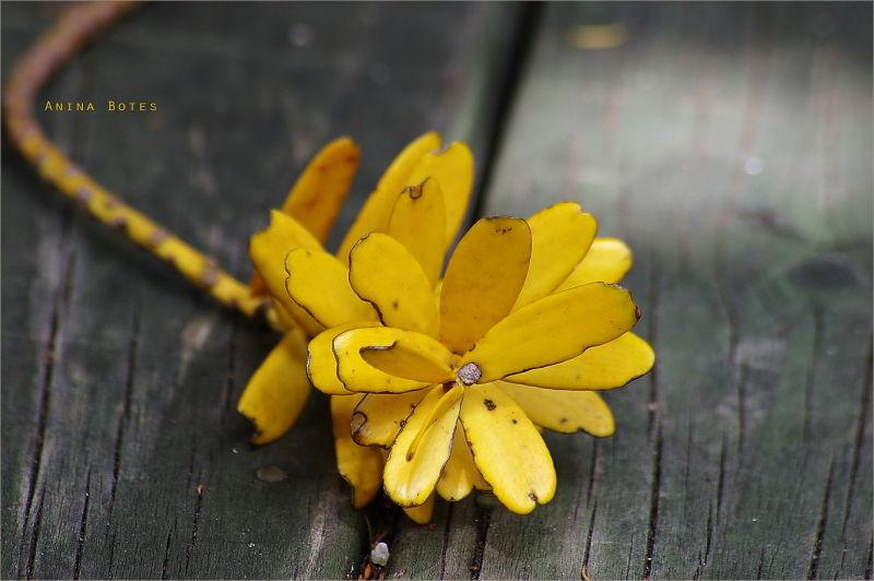 Winter, Yellow, Leaves, Flower, NZ