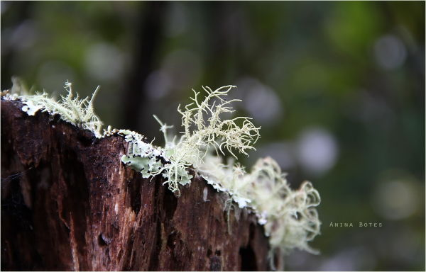 Forest Lichens, Green, Winter, Bokeh, Macro, NZ