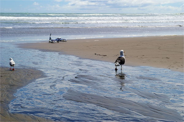 Seagulls, Bike, Beach, NZ