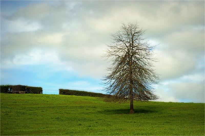 Winter, Tree, Green Grass, Farm, NZ