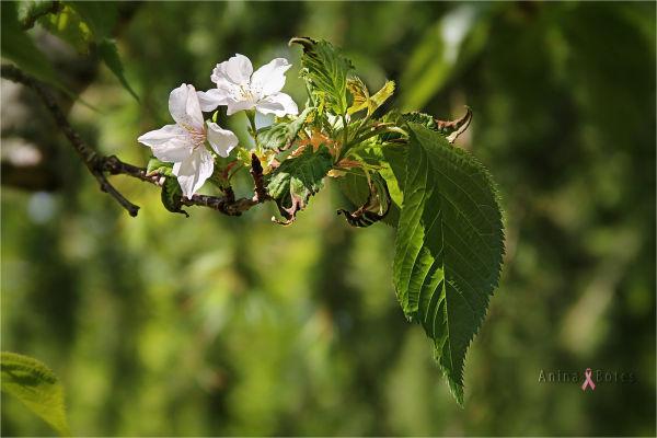 Flower, Bokeh, Close-up, Light, Green, NZ