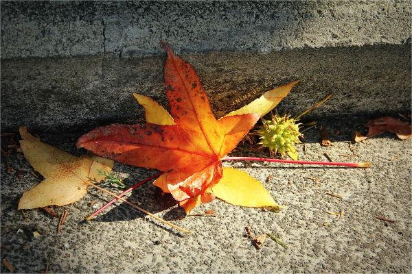 Autumn, Leaves, Colors