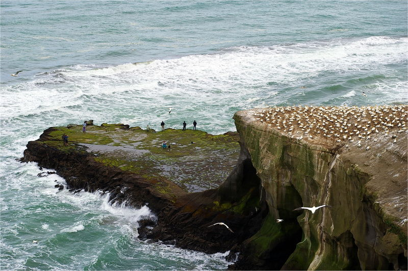 Fishermen, Cliffs, Birds, Ocean