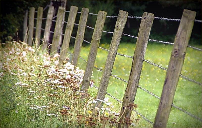 fence, DOF