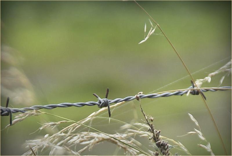DOF, Fence