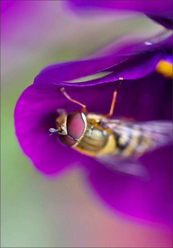 fly, macro