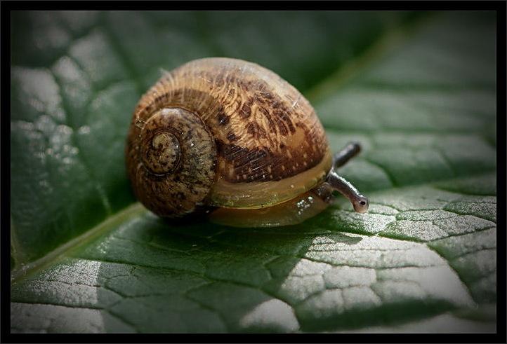 snail, spotlight